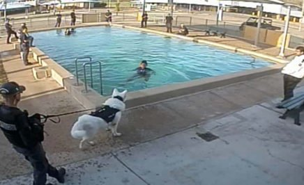 A still from footage showing an officer holding a guard dog near a young girl in a pool