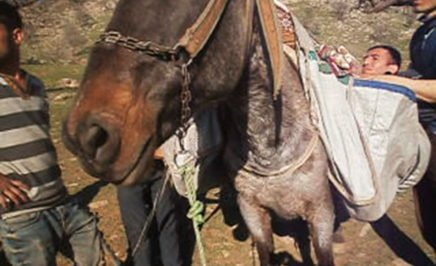 Alan's journey from Syria to Greece, strapped to horseback.